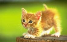 Lindos Gifs Animados de Gatinhos Fofos: Imagens Divertidas, Engraçadas