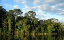 Mata Atlântica Brasileira: Preservação, Animais, Biodiversidade, Fotos