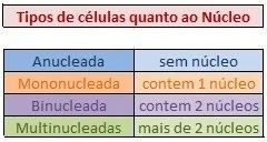 nucleos Características das Células: Tamanho, Forma, Funções, Tipos e Núcleo