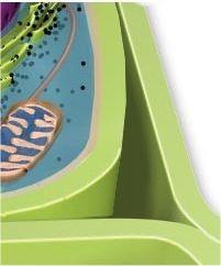 parede celular Envoltórios das Células: Membrana Plasmática e Parede Celular, Resumo