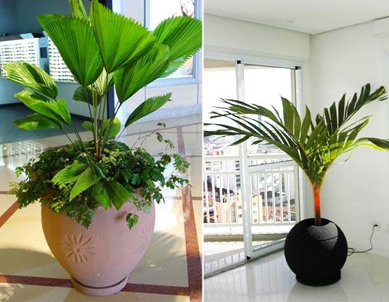 plantas ideais para sua casa 12 Decoração de Interiores  Casa com Flores Naturais é Moderno e Elegante