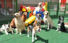 Creche para Cachorros, Animais-Site Bom Negócio Com Pouco Investimento