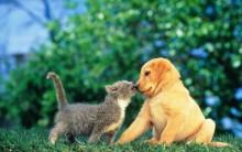 Cemitérios de Animais, Cães e Gatos – Planos, Preços, Telefones, Fotos