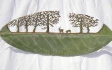 Lorenzo Durán faz Recortes em Folhas Secas, Fotos das Obras de Arte