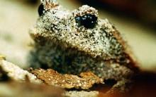 Animais que se Camuflam: Nomes e Fotos de Insetos, Campeõs do Difarce