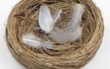 Síndrome do Ninho Vazio Afeta os Pais: O Que É, Tratamento Como Evitar