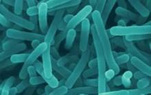 História dos Microorganismos: Descoberta, Doenças Causadas, Imunização