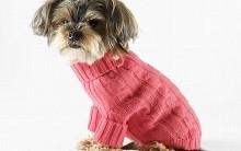 Aquecer Animais de Estimação no Inverno: Roupas para Cães Dicas e mais