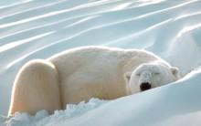 Dormir Mais Faz Emagrecer Afirma Estudo de Universidade de Washington