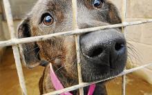 Como Ajudar Animais: ONGs para Cães Abandonados, Sites e Informações