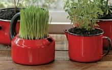 Como Plantar em Recipientes Reciclados: Dicas Decoração, Meio Ambiente