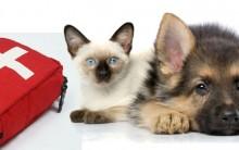Acidentes com Cães e Gatos: O que Fazer, Primeiro Socorro à Animal