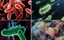 Reino Monera Resumo: Características, Reprodução, Bactérias e Exemplos