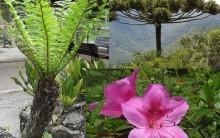 Diferenças entre Briófitas, Pteridófitas, Gimnospermas e Angiospermas
