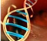 Mapeamento Genético: Tudo Sobre Preço, Dieta e exercício físico ideal