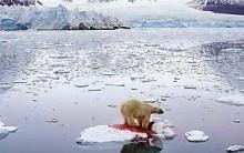 Aquecimento global Alterações climáticas, Consequências, Efeito Estufa