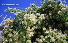 Hortaliça Ora Pro Nóbis: Benefícios, Como Plantar, Receita com Folhas