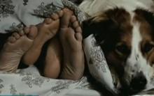 Mato sem Cachorro – Filme comédia romântica, Trailer, Enredo, Elenco