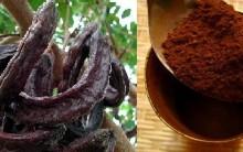 Alfarroba – Fruta que Substitui Cacau no Chocolate, Benefícios à Saúde