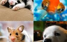 Nomes Legais para Animais de Estimação: Veja Lista de Nomes Divertidos