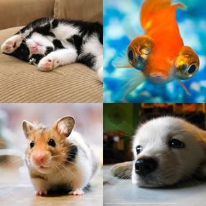 animais-estimação-fofos-nomes-legais-porquinho-da-índia-cão-gato-pássaro-