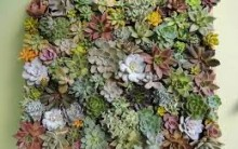 Quadro Vivo Como Plantar Flores Na Vertical Decorar Parede com Plantas