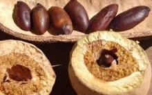 Castanha de Baru – Benefícios à Saúde, Como Usar, Receitas e Culinária