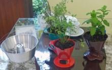 Horta Suspensa Plantar Ervas em Formas, Chaleiras para Decorar Cozinha