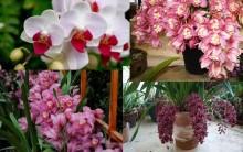 Cuidados com Orquídeas – Como Ter Boa Floração, Regas, Adubagem, Tipos