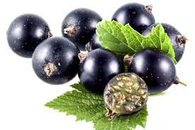 groselha-negra-emagrece-benefícios-á-saúde-