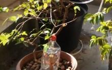 Molhar Planta com garrafa PET – Economizar Água