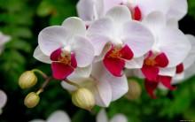Cuidados com Orquídeas – Dicas para Fazer Mudas
