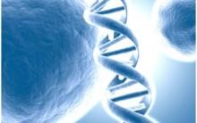 O que é Vida Teoria Celular, Crescimento Reprodução Resumo