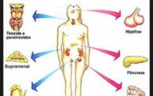 Resumo Sistema Endócrino – Tudo Sobre Hormônios, Hipófise