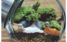 Minijardins Tudo Sobre Jardim no Pote Foto e Onde Comprar