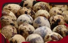 Ovo de Codorna – Benefícios à Saúde e Vitaminas