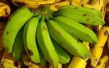 Como Fazer Biomassa de Banana Mais Você 28/10/15