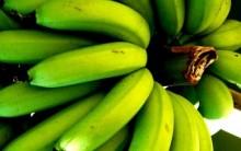 Alimentos que Combatem Diarreia – Dicas de Remédios Caseiros