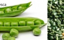 Benefícios da Ervilha Fresca e Seca – Vitaminas e Nutrientes