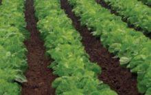 Como Acabar com Agrotóxico dos Alimentos Dica Mais Você 17/05/16