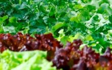 Dicas de Adubo Caseiro para Hortas e Jardins, Como Preparar