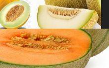 Sementes do Melão contra Celulite Benefícios Nutrientes Bem Estar