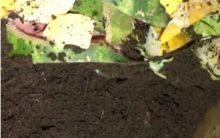 Como Fazer Substrato Orgânico Caseiro de Folhas Secas e Cascas de Vegetais