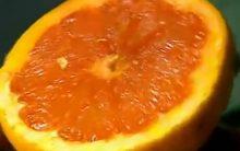 Frutas Ricas em Vitamina A e C – Dicas de Sucos para Gripe