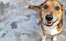Como Adotar um Animal Abandonado: Cachorro, Gato, Onde Adotar