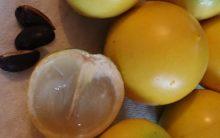 Abiu – Tudo Sobre as Vitaminas e Benefícios da Fruta Abiu ou Guapeva – Dicas de Remédios Caseiros