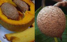 Abricó do Pará – Nutrientes e Benefícios da Fruta Exótica – Foto
