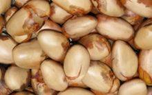 Receita de Bolo de Sementes de Jaca – Receita Nutritiva e Funcional