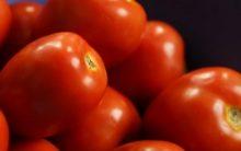 Como Fazer Molho de Tomate Caseiro – Receitas de Molhos com Tomate Fáceis de Fazer