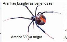 Picada de Aranha Venenosa – Sintomas, Cuidados e Prevenção – Como Tratar e Tipos de Aranha